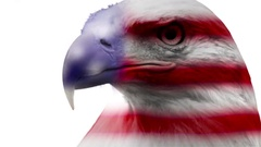 American Icon - Bald Eagle overlaid with flag texture on white background Stock Footage