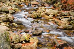 Colorfull mountain creek in autumn weather. River stream with fallen leaves Stock Photos