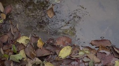 Autumn mood. Multi-colored leaves in water Stock Footage