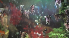 Small fishes swimming in the spacious aquarium Stock Footage