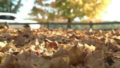 Fall leaves covering forest floor in sunshine 4k Stock Footage