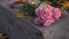 Beautiful pink flowers laying on grave during fall season 4k Stock Footage