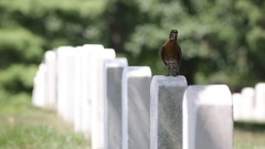 Headstone with a bird on it at the Arlington National Cemetery Stock Footage