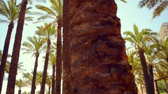 Palm trees wild angle dolly shot.  Tropical palm trees growing. Stock Footage