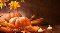 Pumpkin, squash. Happy Thanksgiving Day background. Stock Footage