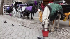 Horses and Carriages on Central Park South Manhattan Stock Footage