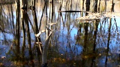 Trees and their reflection in the river in the autumn season Stock Footage