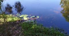 Waterlilies in pond Stock Footage
