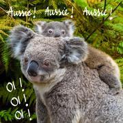 Australian koala bear native animal with baby on the back and Australian koal Stock Photos