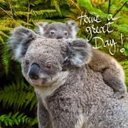 Australian koala bear native animal with baby and Have A Great Day greeting Stock Photos
