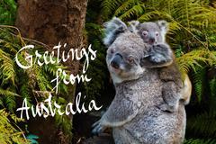 Australian koala bear native animal with baby and Greetings from Australia te Stock Photos