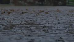 Raining on Muddy Pavement Stock Footage