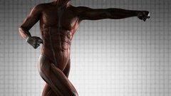 Human Muscle Anatomy Stock Footage