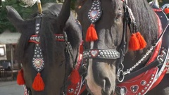 Ornated Horses on Carriage Stock Footage