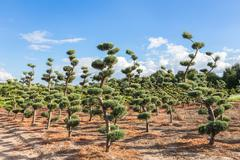 Beautiful topiary shapes in conifers Stock Photos