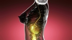 Loop science anatomy scan of human digestive system glowing with yellow Stock Footage