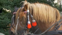 Horses with Red Harness Stock Footage