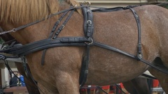 Harness on Horse Stock Footage