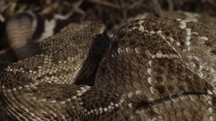 Diamondback snake slithering away Stock Footage