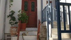 Wide shot of a cat on house steps in mykonos, greece Stock Footage