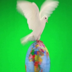 White pigeon on the globe an earth symbol on green screen Stock Footage