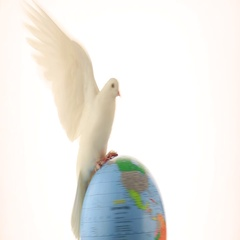 White pigeon on the globe an earth symbol  isolated on white background Stock Footage