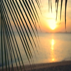 Orange Sky Silhouette Palm Tree Branch Nature Sunset Beach Sea Tropical Island Stock Footage