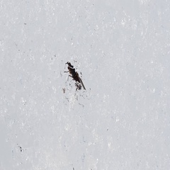 Fly goes out of the snow in winter Stock Footage