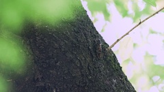 Cicadas growing, adults moving trees Stock Footage
