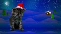 Little funny cat in red Santa Claus hat yawns, waiting for Christmas eve Stock Footage