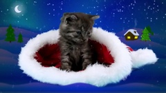 Very cute little kitten puts tenderly his paw, sitting in Santa Claus hat Stock Footage