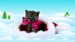 Merry Christmas card with text, little kitten with pink bow looking around Stock Footage