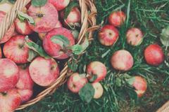 Basket with apples harvest in garden, top view Kuvituskuvat