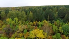 Trees in the autumn Stock Footage