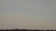 Flock of sea gulls over landfill garbage landscape Stock Footage