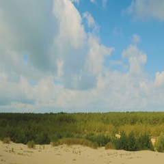 Forest on the Sand Dunes Stock Footage