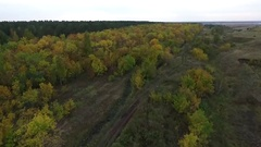 Autumn forest cloudy Stock Footage