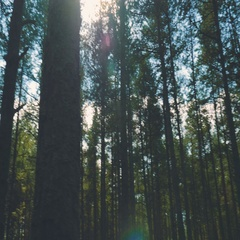 Ray of sunlight in the Forrest Stock Footage