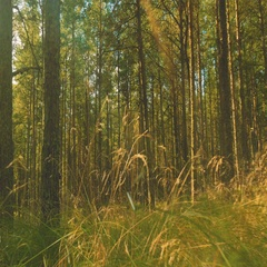 Mysterious Coniferous Forest Stock Footage