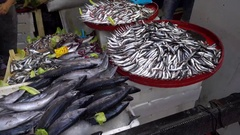 Diffrent mackerel and anchovy on sale  Stock Footage