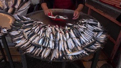 Fresh Sardina at sales Stock Footage