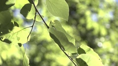 Detail view of leaves in nature on sunny day 4k Stock Footage