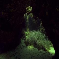 Sunlight penetrates underwater cavern Stock Footage