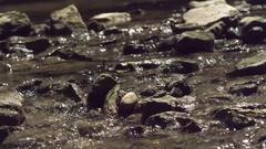 Rocks in creek bed with water flowing by slow motion Stock Footage