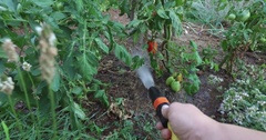 Eco gardening : Watering vegetables point of view Stock Footage