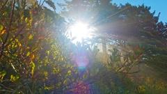 Sun rays peeking through tree branches Stock Footage