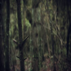 4k Halloween Dark Angel Woman with Black Wings in Forest Looking Scared Stock Footage