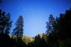 5K Astro Timelapse of Starry Sky over Alpine Forest  Stock Footage