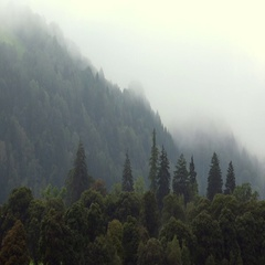 Alpen Forest in Morning Fog. Stock Footage