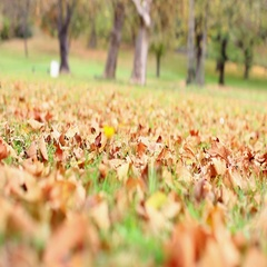 Autumn leaves in park, colorful leaf ,fall season, outdoor nature Stock Footage